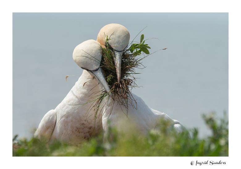Samen aan het nestje bouwen -