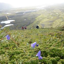 bloemen op de berg