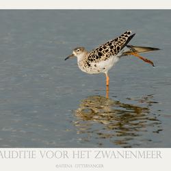 Auditie voor het Zwanemeer