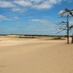 Woestijn @ Brabant
