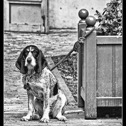 Hondstrouw.....