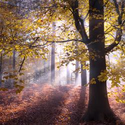 Dancing autumn
