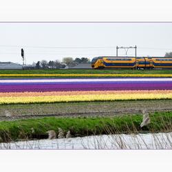 Een echt Hollands plaatje