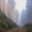 In to the foggy forest.