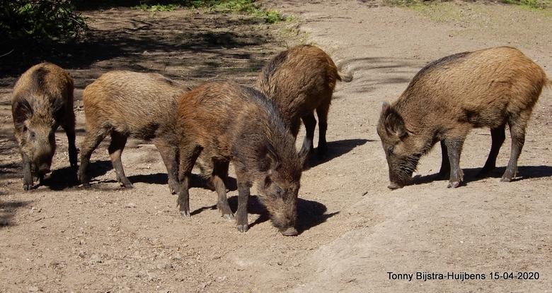 wroeten maar - een bezoek aan Natuurpark in Lelystad gebracht, er waren niet bijzonder veel dieren te zien en er was niet veel bezoek. gelukkig zagen