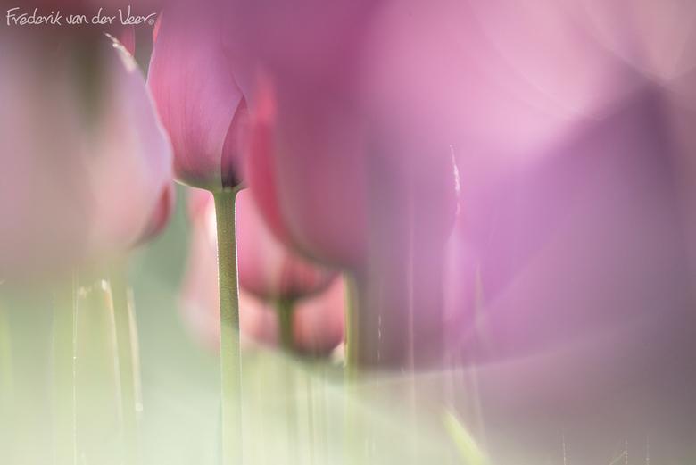Tulpenbos