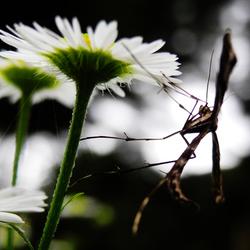 insect op fijnstraal