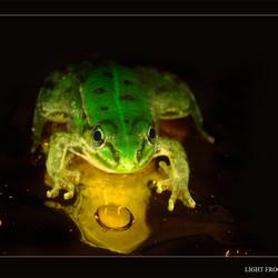 Light froggy
