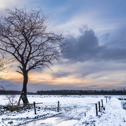 Winter in Vries - boom