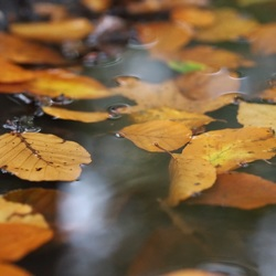 Floating leafs