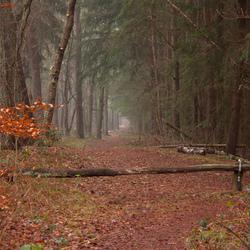 Forrest walk