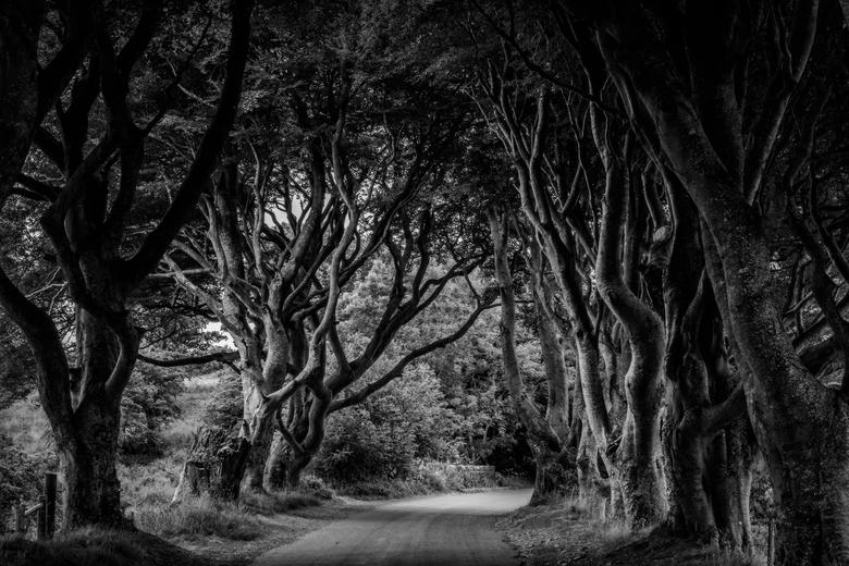 "Dark Hedges - De ""dark hedges"" in Noord-Ierland."