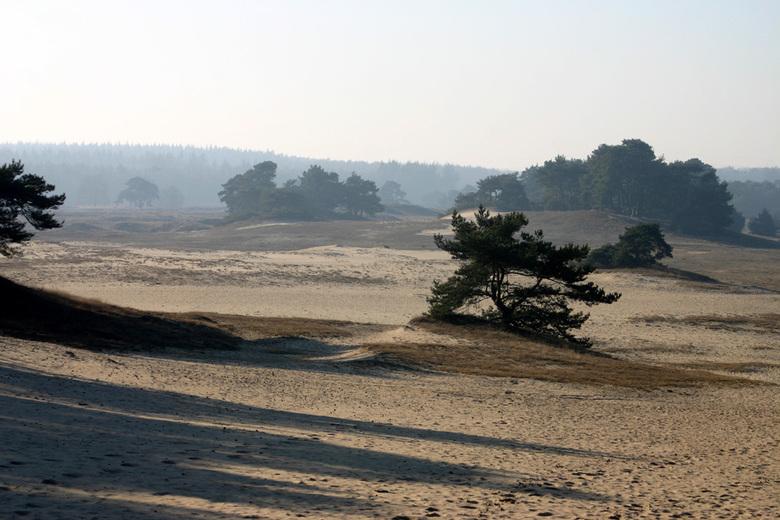 Wekeromse zand | Landschap foto van gejellie | Zoom.nl