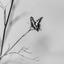 Koningsvlinder in Toledo