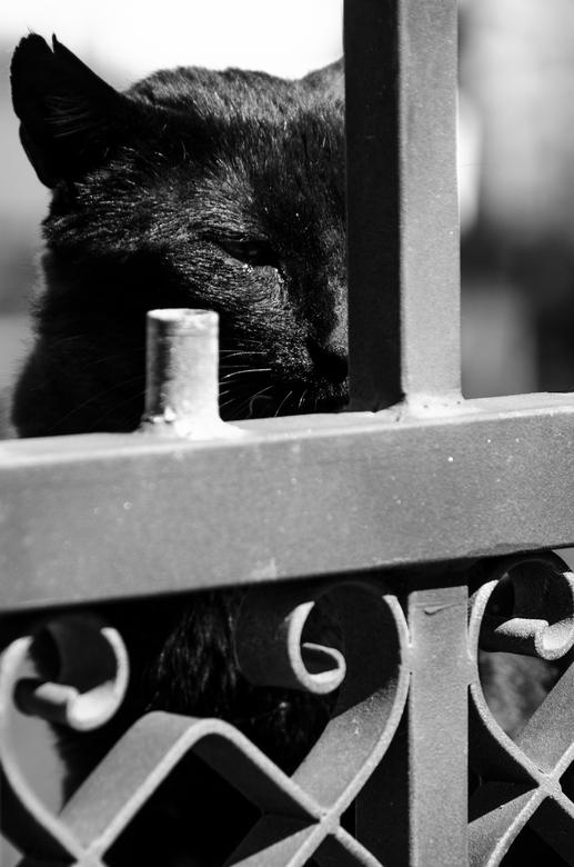 naamloos - terwijl mijn vrouw het zakje voer openmaakt, kijkt deze kat geduldig toe en wacht zijn beurt af.