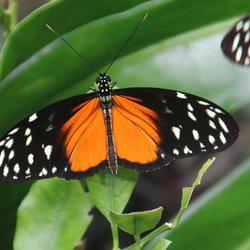 Vlinders aan de Vliet -2-