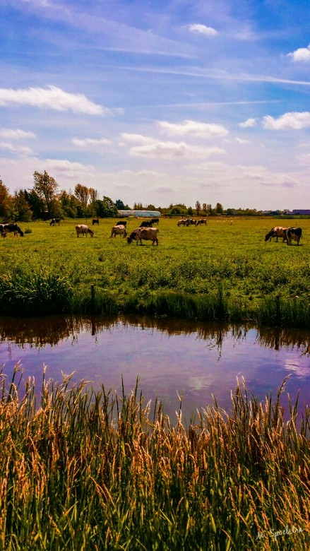 Hollandse zomer -