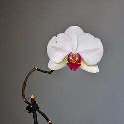 Zo maar een orchidee