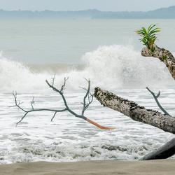 Caraïbische zee