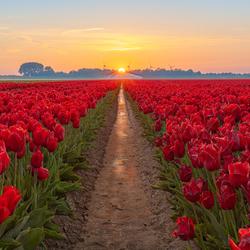 Tuliproad to sunset