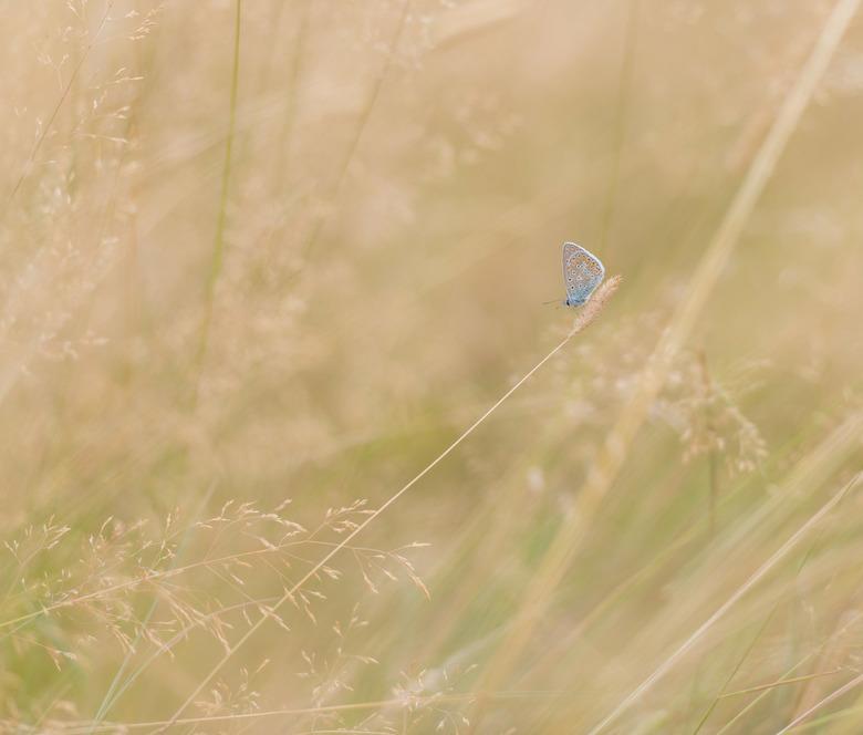 Diagonaal - Het enige voordeel van het droge veld is het mooie contrast.