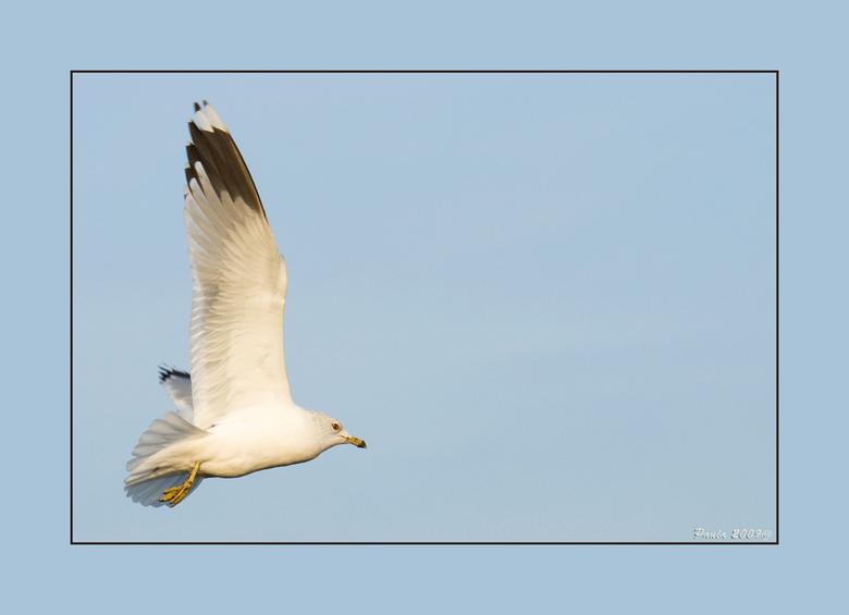 """vogelvlucht - Foto van vanmiddag,<br /> brood meegenomen voor de vogels<img  src=""""/images/smileys/smile.png""""/><br /> Groetjes Paula"""