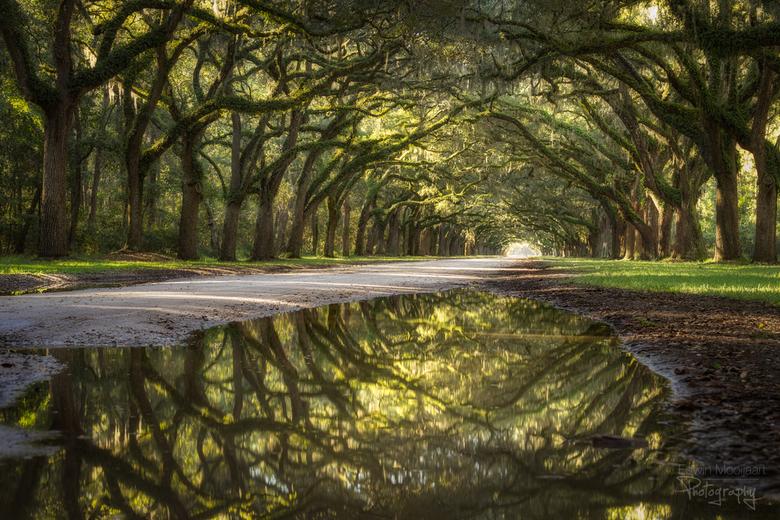 Reflecting Oak Alley
