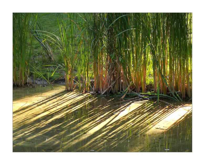 riet in drievoud - De ochtendzon geeft weerspiegeling van het riet in het water en schaduwen. Eenvoudig maar fijn plaatje vond ik....