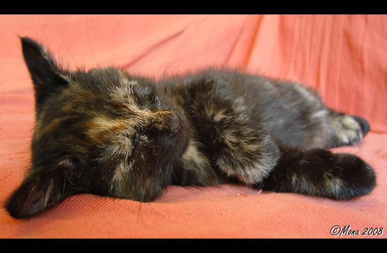 Aeon - Onze kitten Aeon, op deze foto is ze 9 weken ^^