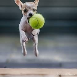 Waar is de bal