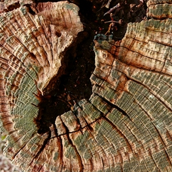 Oud eikenhout