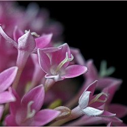 Almost in the trash