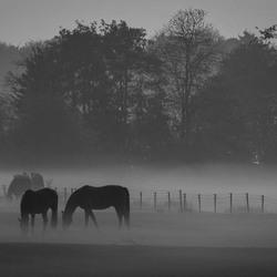 Caught in Fog