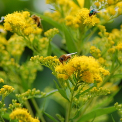plant, geel, bij, wesp, vlieg