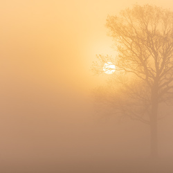 Misty winter sunrise