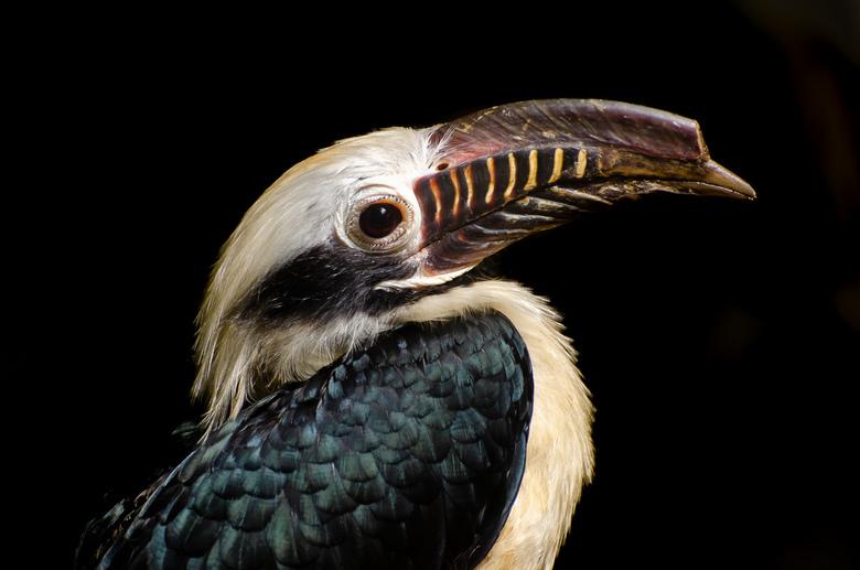 Vogel Avifauna - Leuk dagje Avifauna