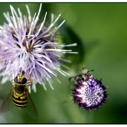 de bloemetjes en de bijtjes