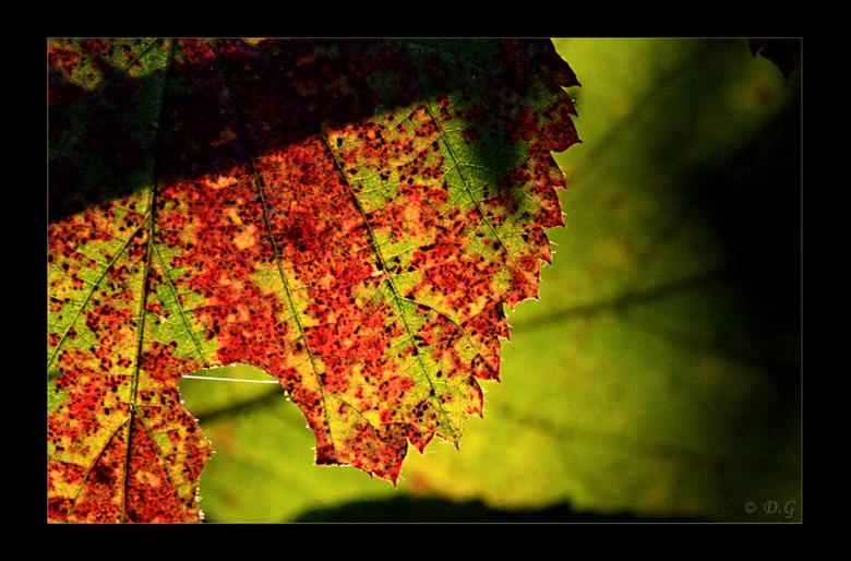 Bleeding Colours - Een tijdelijke golf van kleur door onze natuur! Laat de zon alsjeblieft zoveel mogelijk schijnen dit seizoen!