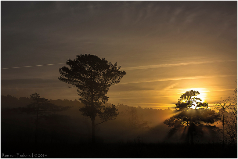 Daar komt de zon! - Langzaam komt de zon omhoog, achter de bomen vandaan!