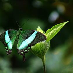 Vlinders aan de Vliet -7-
