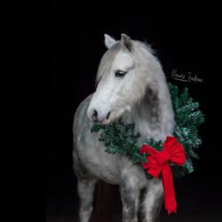 Kerst Pony