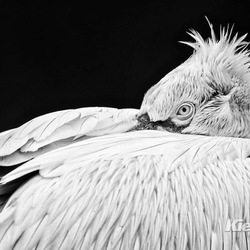 Big bird ...