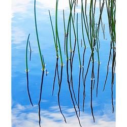 Nature Art 2011 - 23