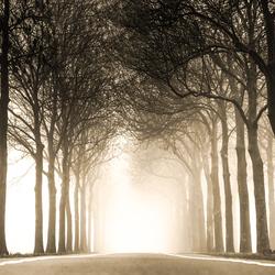 Sunny mist