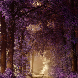 Purple fairyland