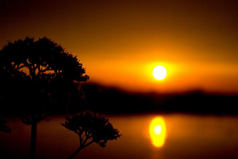 Silhouet - Silhouet van een bloem tegen de zonsondergang aan de Ijssel.