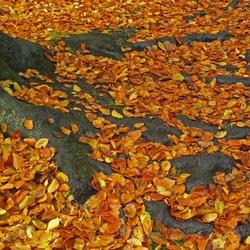 wortels in de herfst
