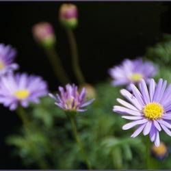bloemetje...