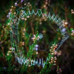 140928 Herfst Dauw spinnenweb. Slabroek-0052
