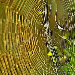 Golden web.